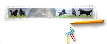Bild Lineal mit Tiercollage