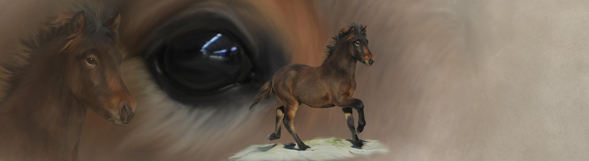 Pferde-Collage durch Foto-Collage mit Pferden