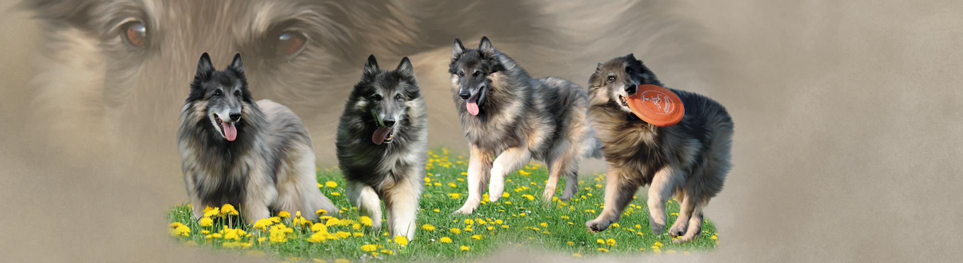 Hunde-Collage durch Foto-Collage mit Hunden