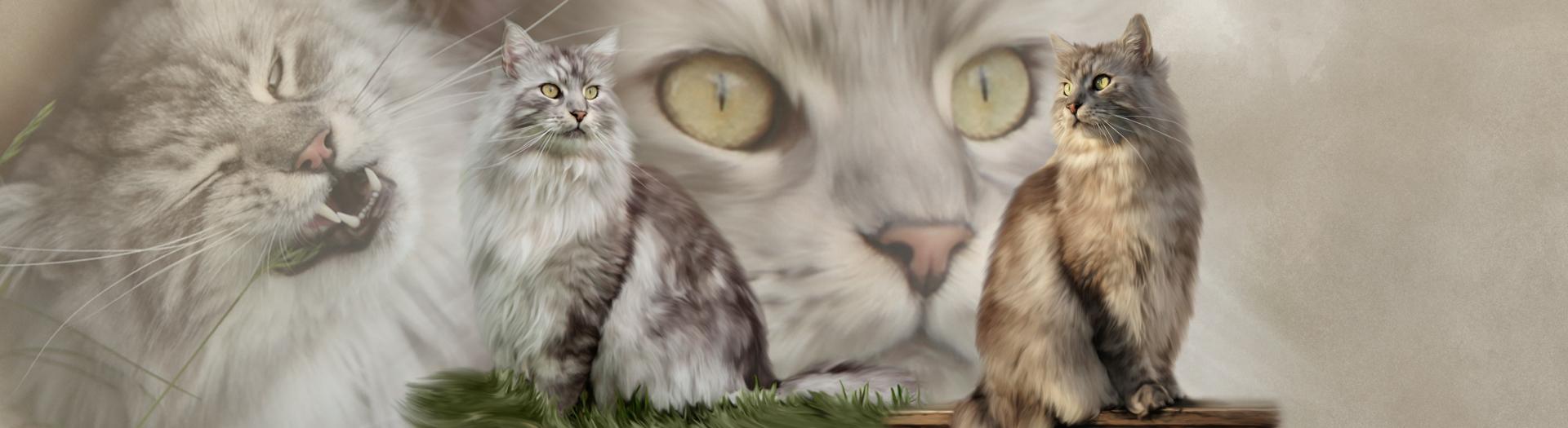 Katzen-Collage durch Foto-Collage mit Katzen