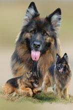 Hunde Fotocollagen