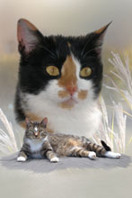 Maltechnik Katzen