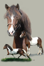 Pferde Fotocollagen